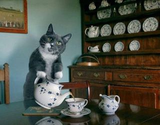 Cat Tea Party